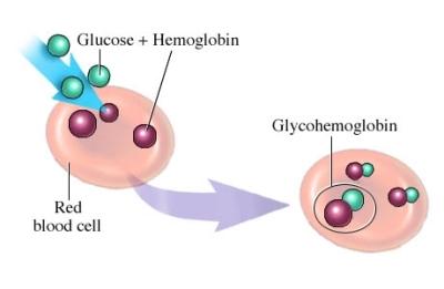 haemoglobin