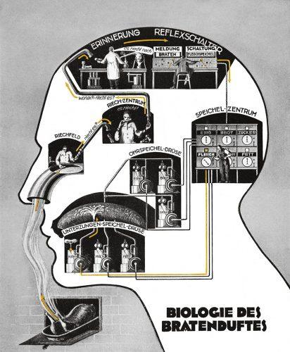 بیولوژی بویایی