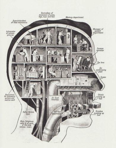 عملکرد مناطق مختلف مغز